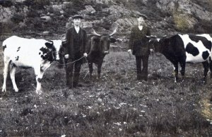 En gång var Toltorpsdalen betesmark. (Mölndals Hembygdsförenings bildarkiv.)