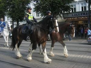 Polishästarna var lika ståtliga och granna som högvaktens pukhäst.