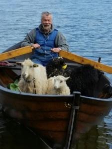 """Siösteen ror får på Gotland 2015 i sin gotländska allmogebåt """"Fru Vind""""."""