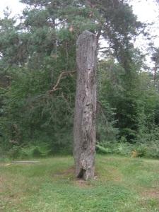 Starkodders sten är en bred och inte särskilt tjock stenskiva. Foto: Lars Gahrn.